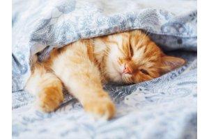 Почему кошки спят с хозяином?