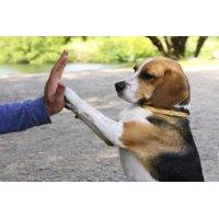 Окружающий мир и социализация щенка